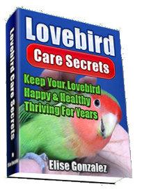 Lovebird Care Secrets